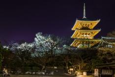 Kyoto-8065 copy