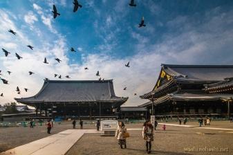 Kyoto-9261 copy