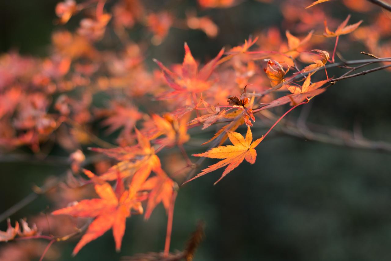 kiyomizu-dera-1-16